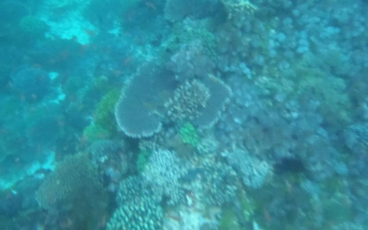 underwater pulau alor