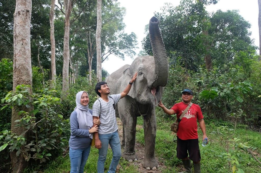 gajah ngatini buluhcina dan pak panggong