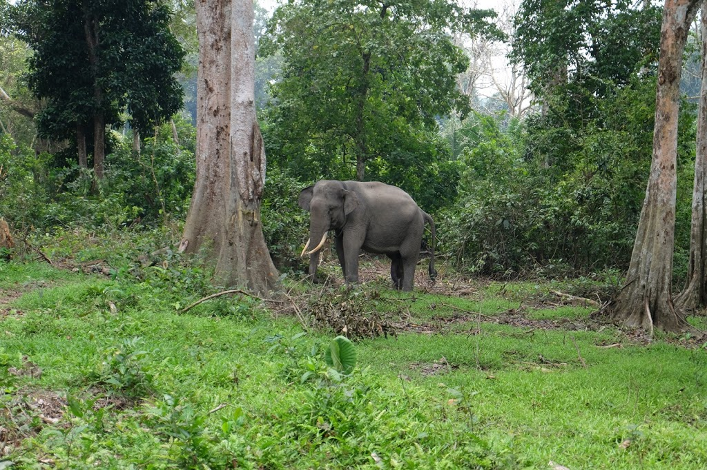 gajah robin hutan wisata buluhcina