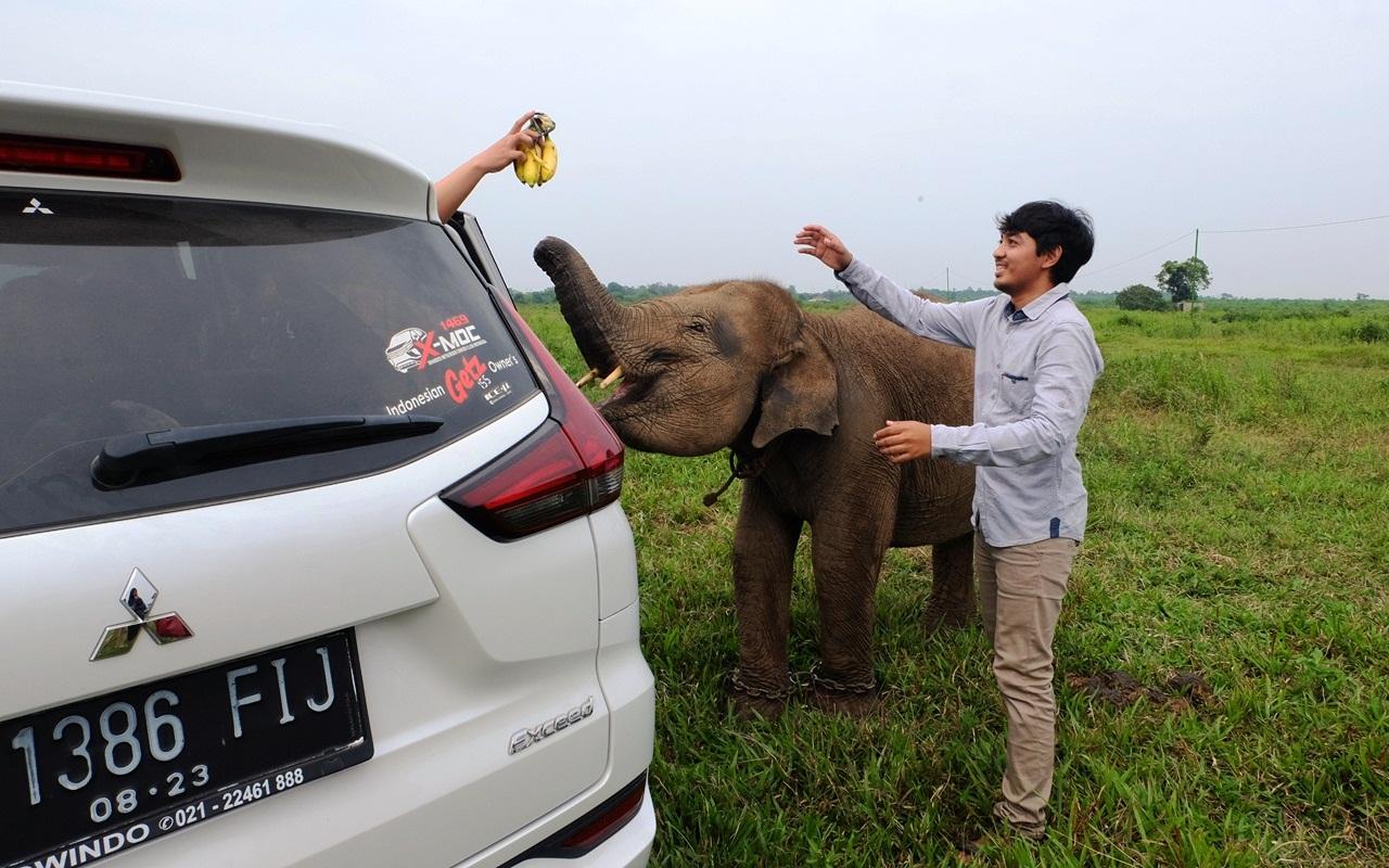 Erin gajah way kambas lampung