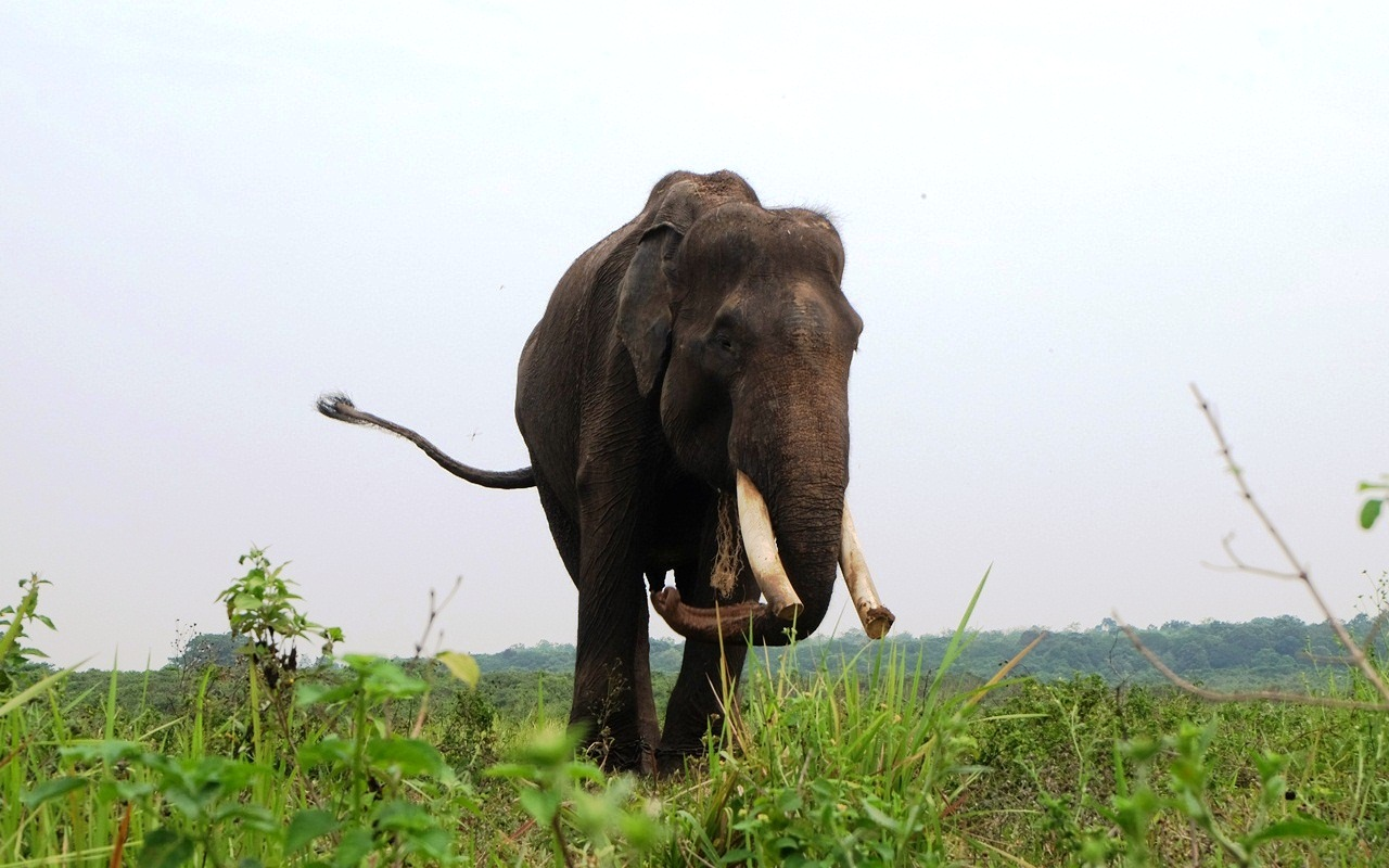 gajah di way kambas lampung