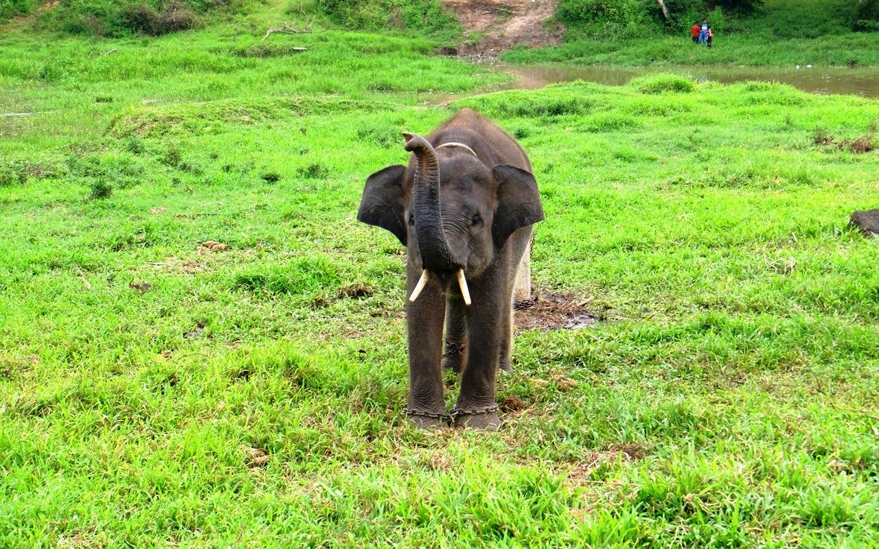 gajah kecil way kambas lampung
