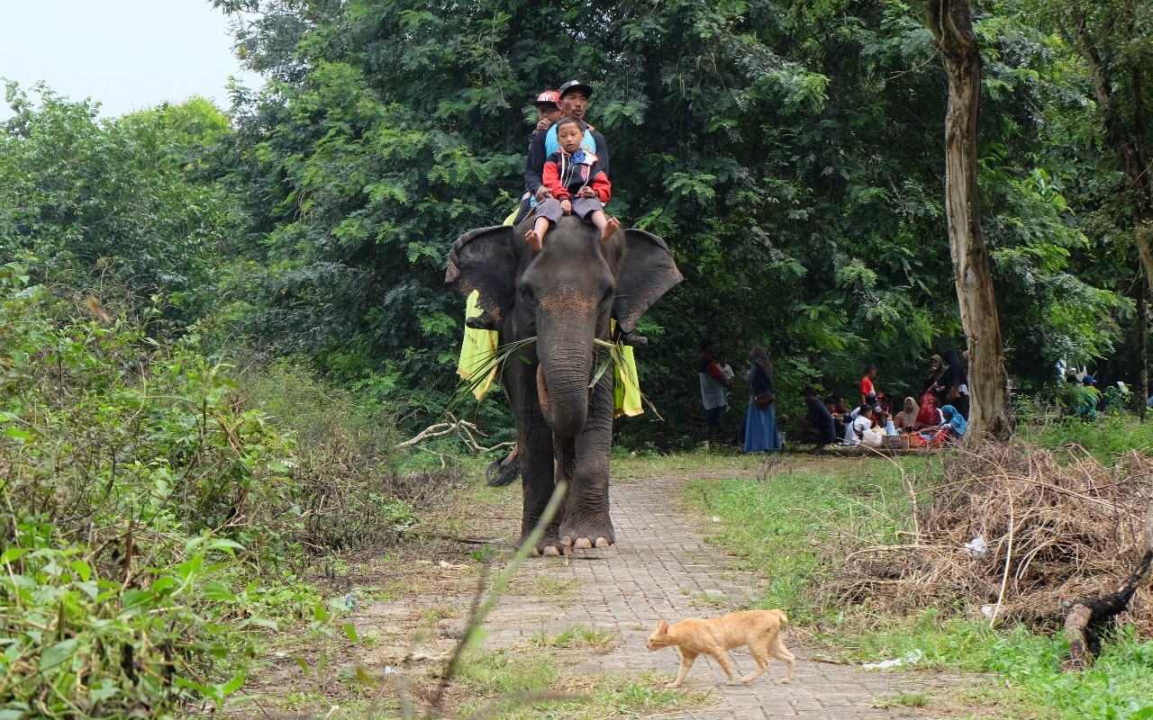 gajah way kambas lampung