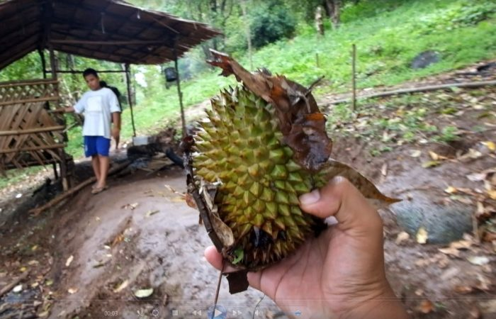 durian di mamuju