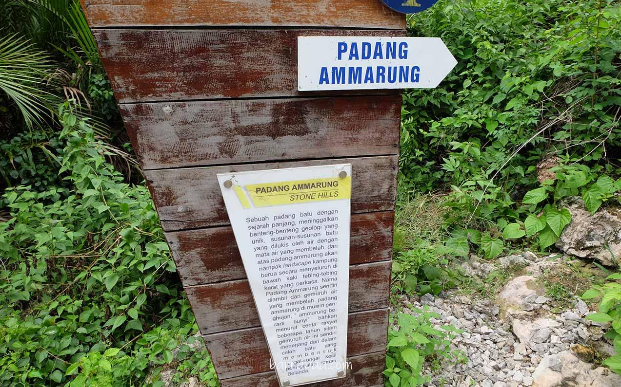 asal usul padang ammarrung